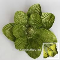 48 stuks per omdoos  Kerstbloem Magnolia Glitter -  Lime